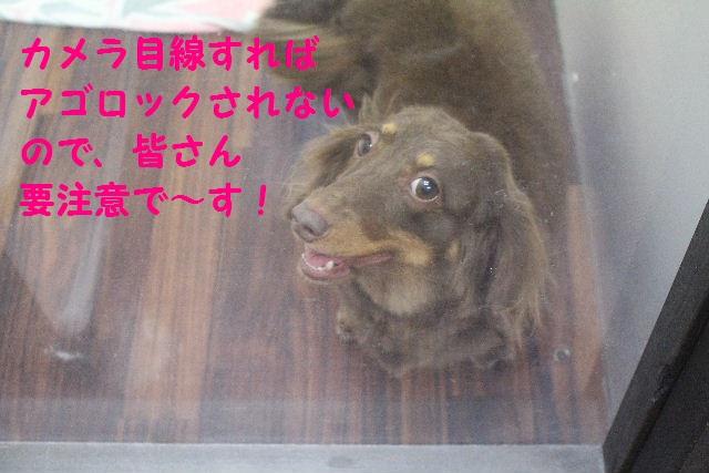 b0130018_1165491.jpg
