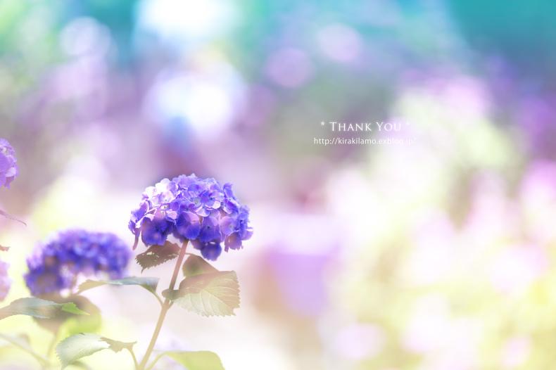 みんなの「紫陽花&雨の季節らしいすてきな一枚」をご紹介!_f0357923_1323533.jpg