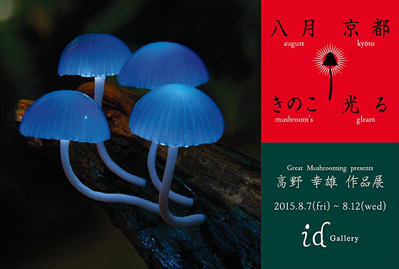 八月・京都・きのこ・光る_a0192147_2332365.jpg