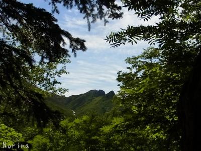 ニセカウシュッペ山 16/07/\'15_e0326953_15301768.jpg