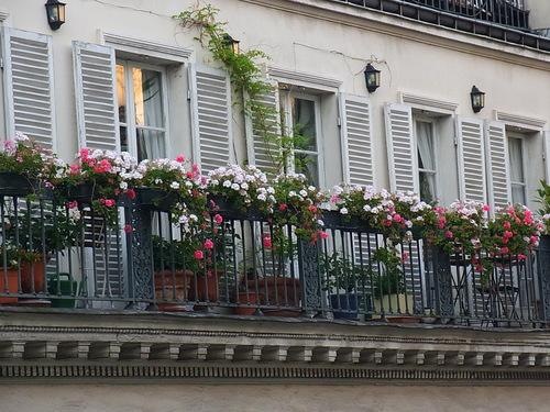パリの花_b0105897_1395188.jpg