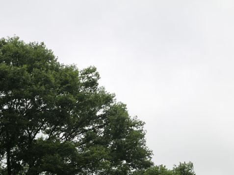 蒸しっと曇りの金曜日(*^▽^*)_c0140599_11365823.jpg