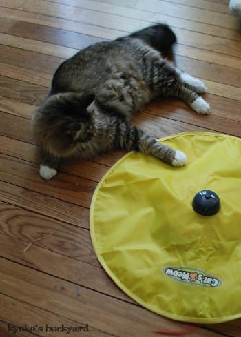 引き続き大人気♪な、猫のおもちゃ_b0253205_01323290.jpg