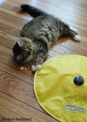 引き続き大人気♪な、猫のおもちゃ_b0253205_01324881.jpg