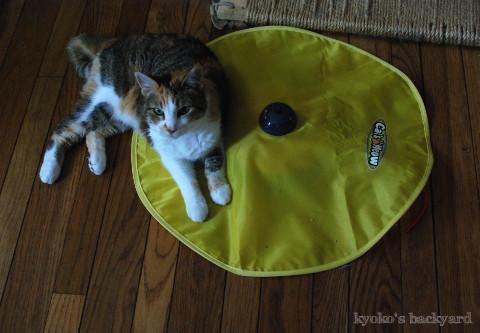 引き続き大人気♪な、猫のおもちゃ_b0253205_01341752.jpg