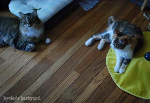 引き続き大人気♪な、猫のおもちゃ_b0253205_01344819.jpg