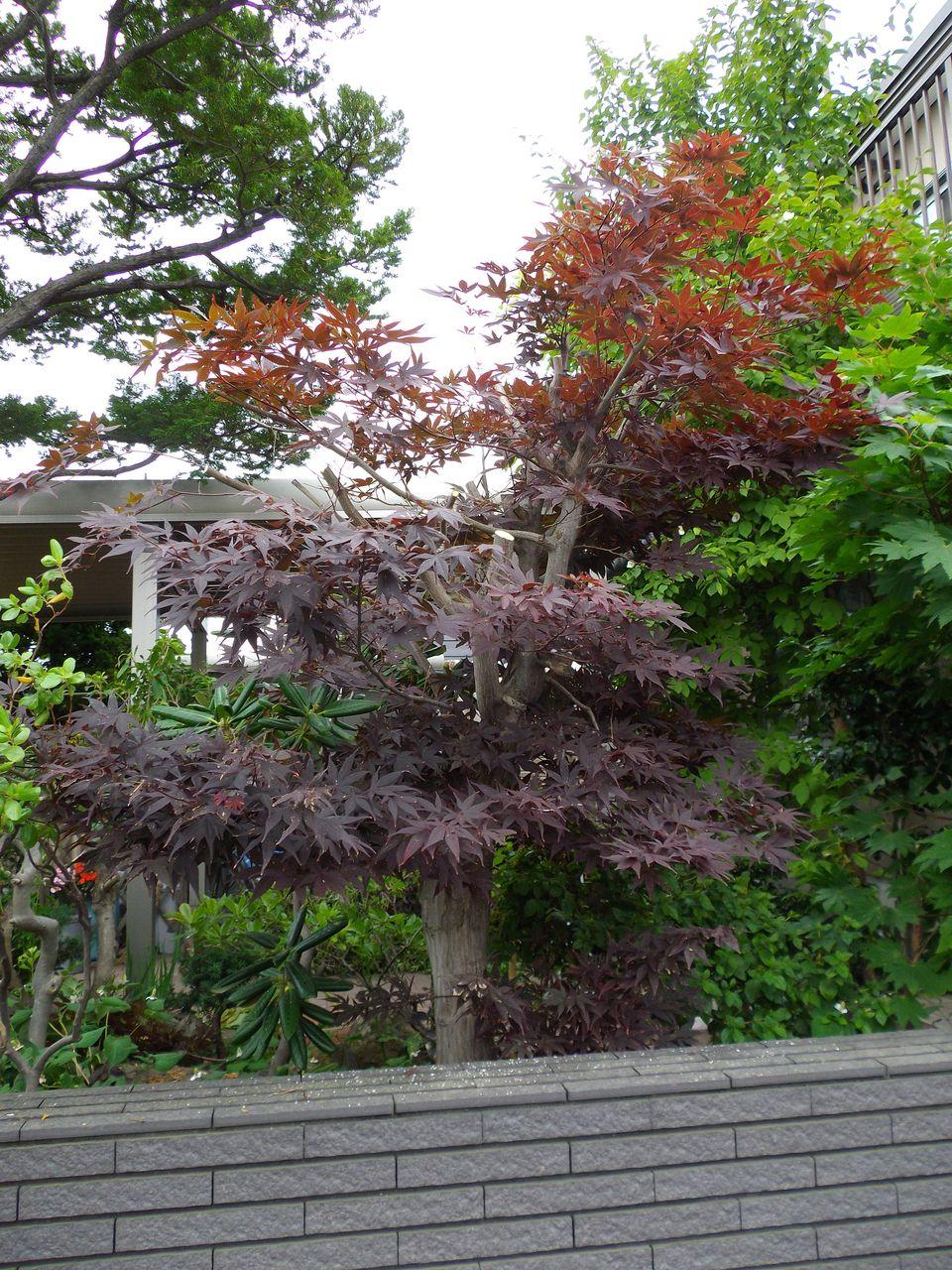 庭を明るくする月間_c0025115_2227664.jpg