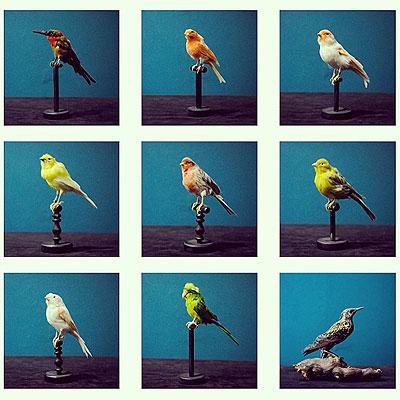鳥の剥製_f0247848_13555346.jpg