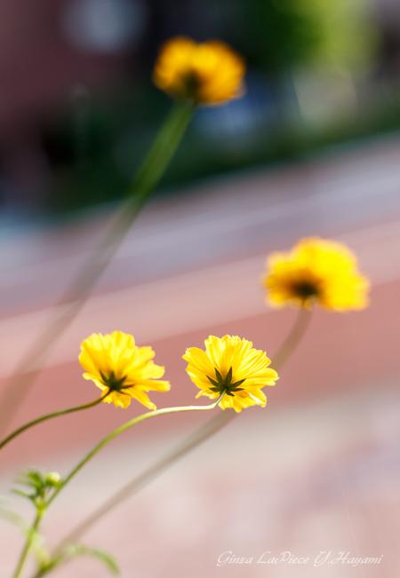 花のある風景 街中の花_b0133053_23593712.jpg