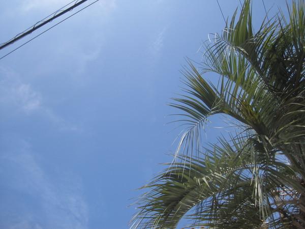 良い天気_a0142059_16311824.jpg