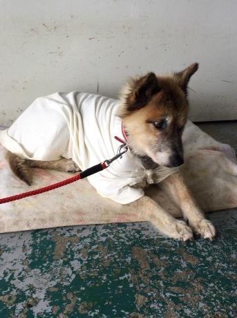 後期高齢犬ハナさん_a0077071_07075342.jpg