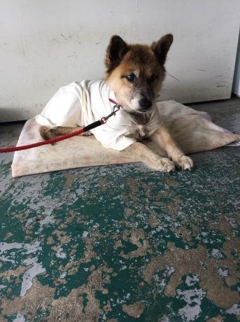 後期高齢犬ハナさん_a0077071_07081523.jpg