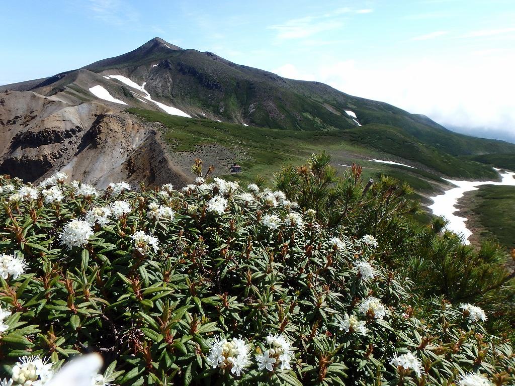 上ホロカメットク山避難小屋周辺の花、7月16日_f0138096_21232392.jpg