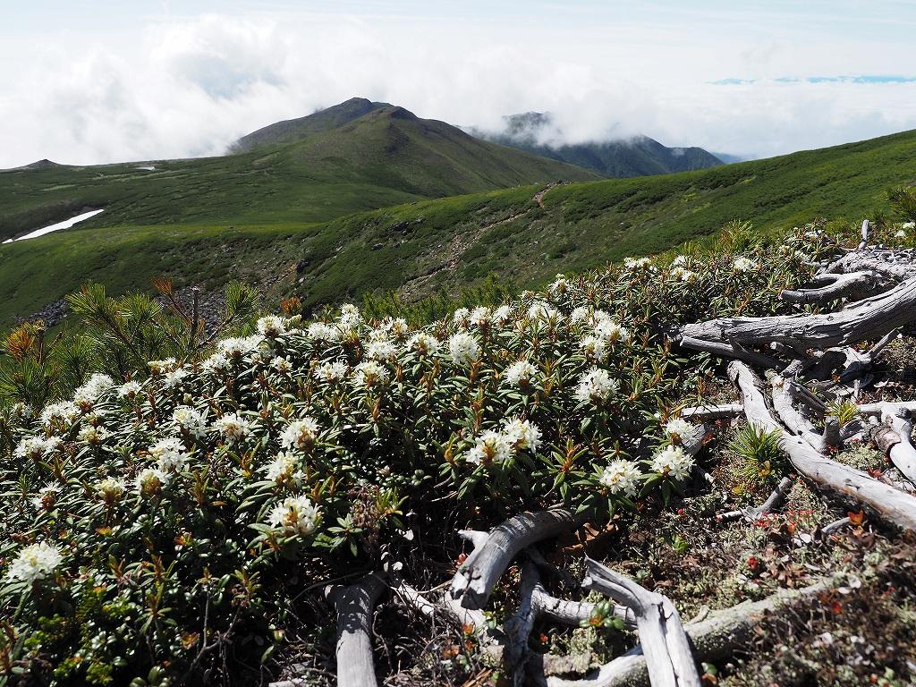 上ホロカメットク山避難小屋周辺の花、7月16日_f0138096_21241740.jpg