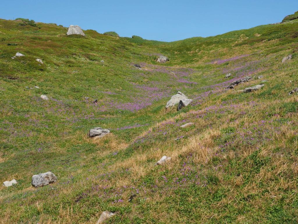 上ホロカメットク山避難小屋周辺の花、7月16日_f0138096_21242515.jpg