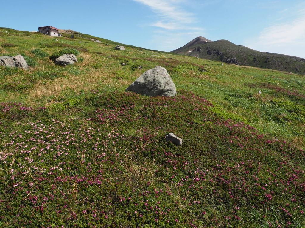 上ホロカメットク山避難小屋周辺の花、7月16日_f0138096_21243495.jpg
