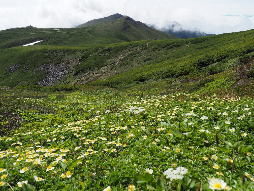 上ホロカメットク山避難小屋周辺の花、7月16日_f0138096_2124863.jpg