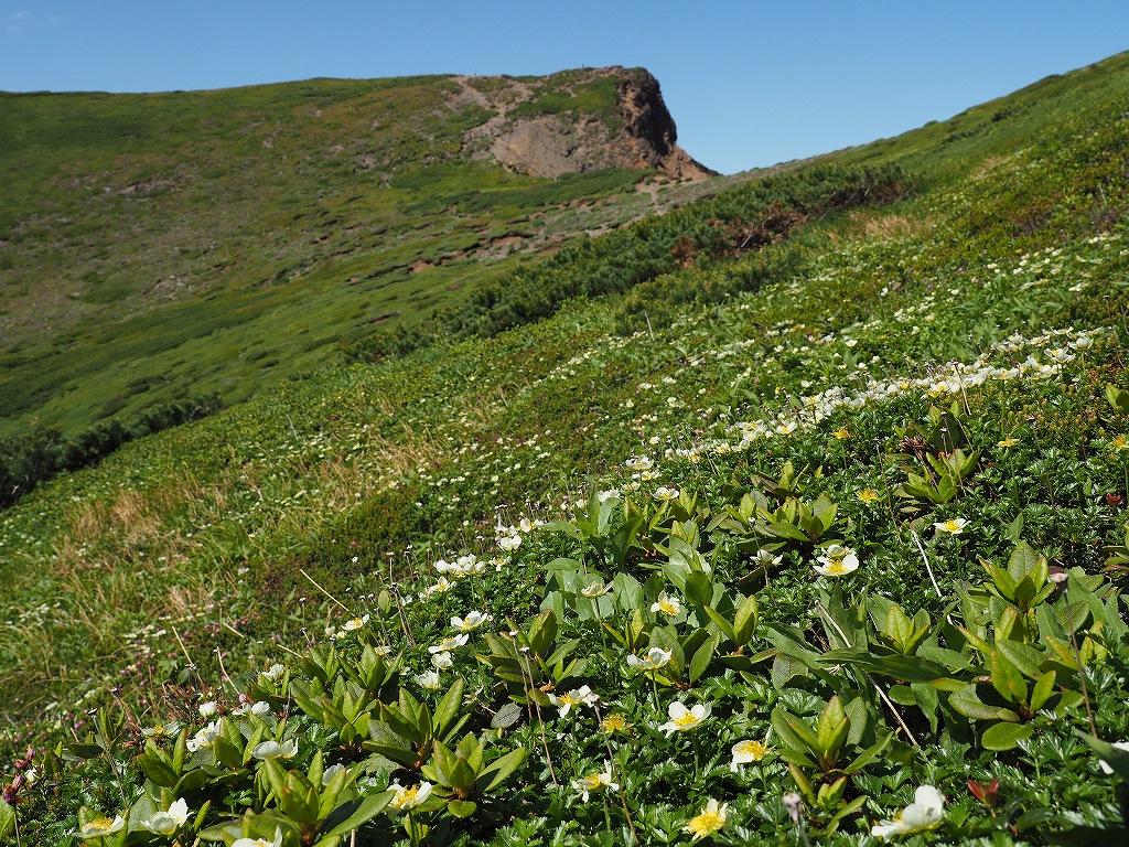 上ホロカメットク山避難小屋周辺の花、7月16日_f0138096_21251794.jpg