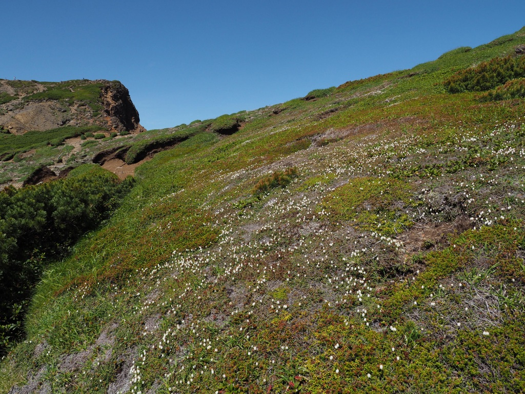 上ホロカメットク山避難小屋周辺の花、7月16日_f0138096_21252475.jpg