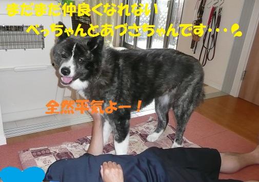 f0121712_16293011.jpg