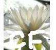 Phe508del CFTRホモ接合体の囊胞性線維症に対してルマカフトール+アイバカフトールは有効_e0156318_22432770.jpg