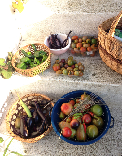 トマトがたくさん穫れます_f0131628_0372171.jpg