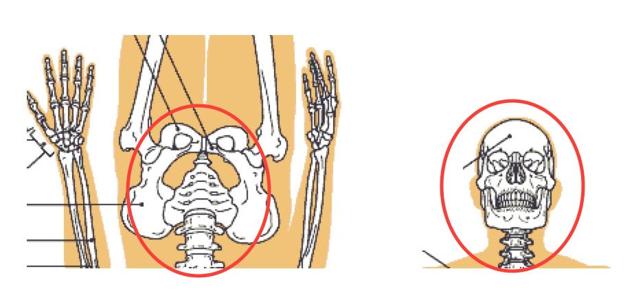 夏休み、旅行先での歩きすぎによる腰痛〜ある日の施術より〜_e0073240_9255821.jpg