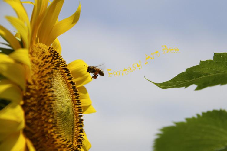 sunflower_f0281446_01343678.jpg