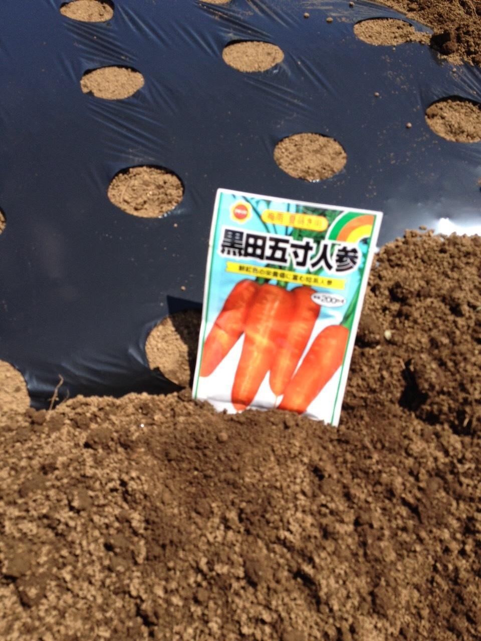 今朝は ニンジンの播種  飯田 大田さん 石川さん 田邉さんの4名_c0222448_14522934.jpg