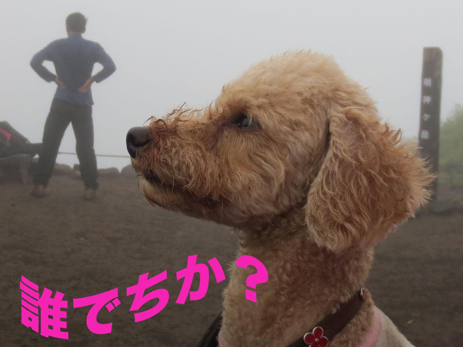 箱根・明神ヶ岳を登って来ました〜_a0109467_22351425.jpg