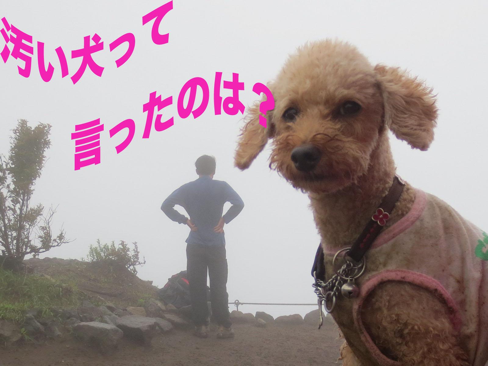 箱根・明神ヶ岳を登って来ました〜_a0109467_2235326.jpg