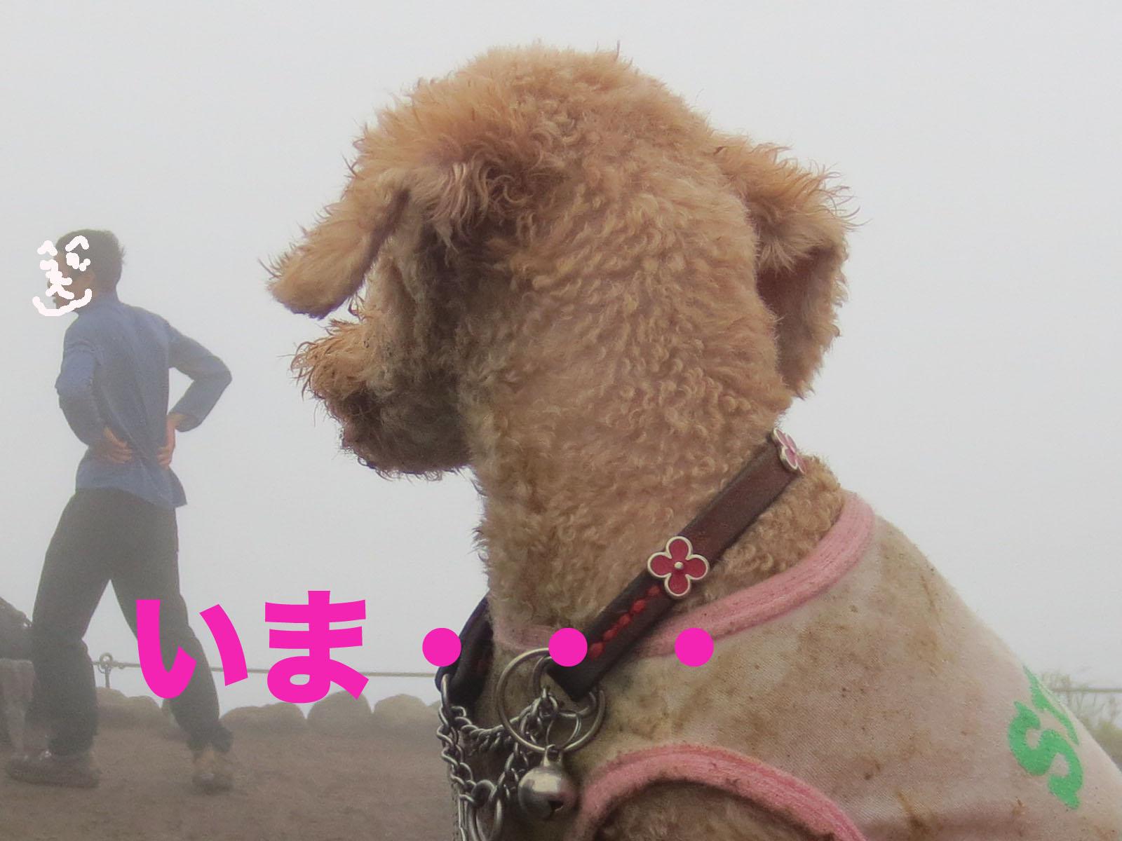 箱根・明神ヶ岳を登って来ました〜_a0109467_22395611.jpg