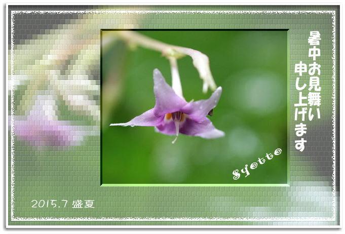f0164592_1655252.jpg