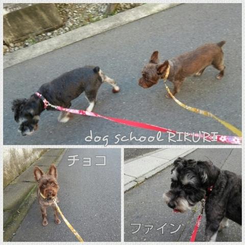 お散歩代行    ~ チョコちゃん&ファインちゃん ~_a0284100_13093759.jpg