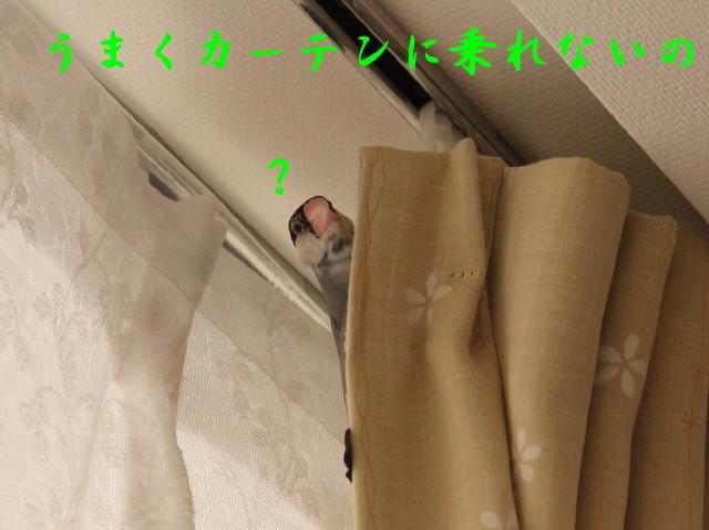 c0365734_22252204.jpg