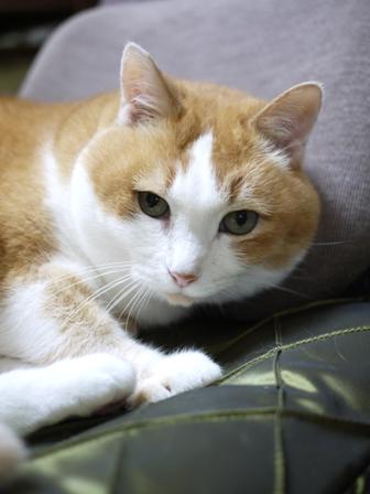 猫のお留守番 ふくちゃん編。_a0143140_22114658.jpg