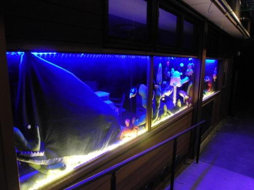 海の日 ~ K様水族館ライトアップ ~_e0222340_20134037.jpg