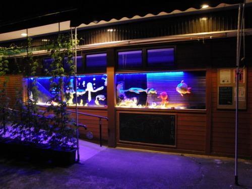 海の日 ~ K様水族館ライトアップ ~_e0222340_2014772.jpg