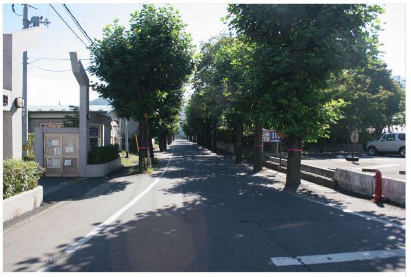 県立盛岡四高の並木道について(結果報告)_b0199244_22393910.jpg