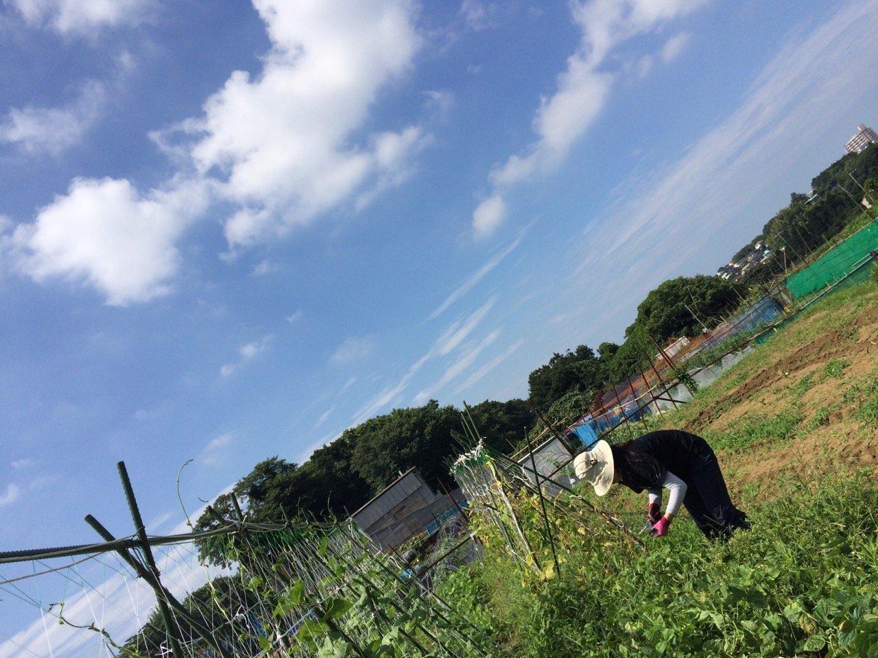 昨日梅雨明けしたらしい・・・畑 猛暑です 草刈り 収穫 今朝は4人体制 水分補給しながら_c0222448_12182889.jpg
