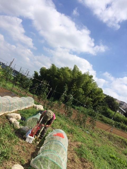 昨日梅雨明けしたらしい・・・畑 猛暑です 草刈り 収穫 今朝は4人体制 水分補給しながら_c0222448_12184442.jpg