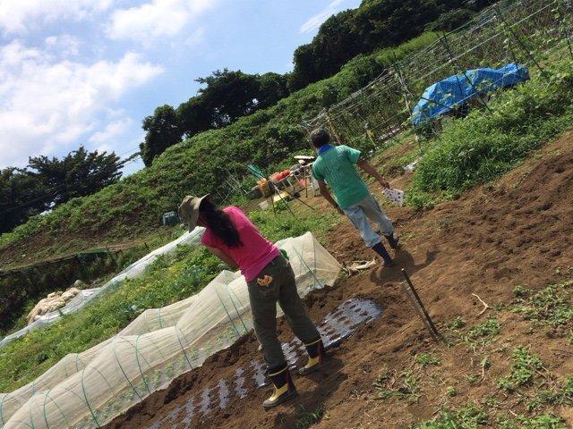 昨日梅雨明けしたらしい・・・畑 猛暑です 草刈り 収穫 今朝は4人体制 水分補給しながら_c0222448_12185503.jpg