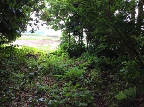 アナーセン引越を終えて・・・・大木に見守られた空間_b0137969_06011271.jpg