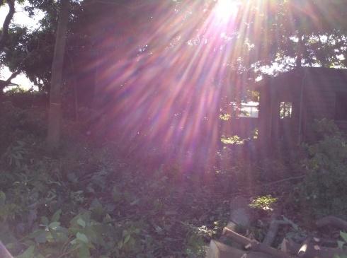 アナーセン引越を終えて・・・・大木に見守られた空間_b0137969_06072796.jpg