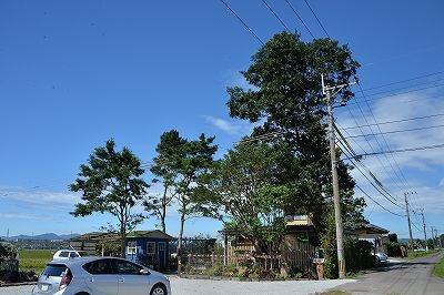 アナーセン引越を終えて・・・・大木に見守られた空間_b0137969_06371778.jpg