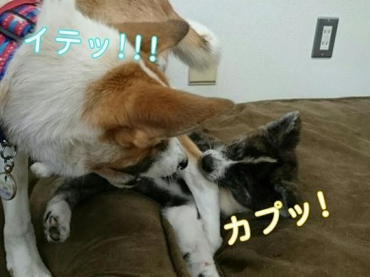 犬三昧な週末~土曜日編~_e0297387_13134844.jpg