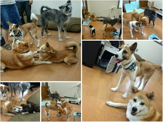 犬三昧な週末~土曜日編~_e0297387_13135142.jpg