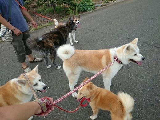 犬三昧な週末~日曜日編~_e0297387_13181527.jpg