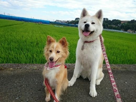 犬三昧な週末~日曜日編~_e0297387_13182117.jpg