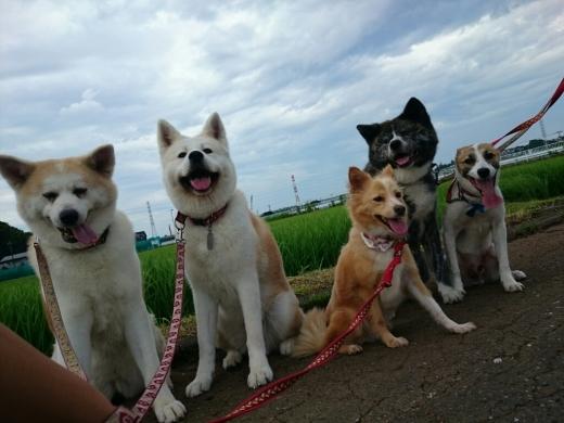 犬三昧な週末~日曜日編~_e0297387_13182736.jpg